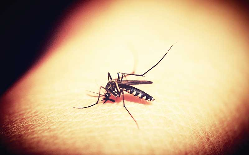 Mosquito-Diseases-and-Symptoms-01